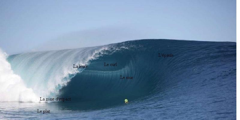 une belle photo avec des mots expliquant les différentes parties de la vague en surf